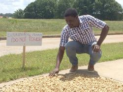 Maxwell Lamptey with his experiment on solar drying peanuts