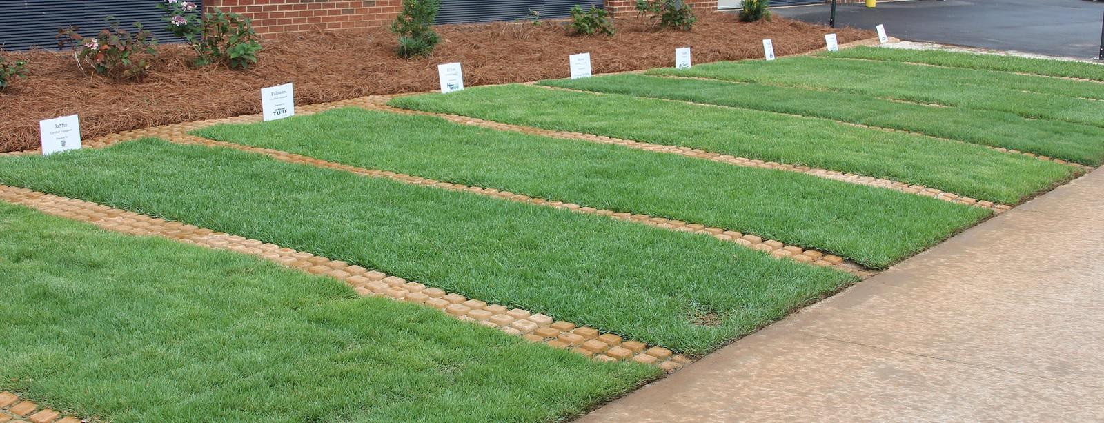 Turfgrass Plots