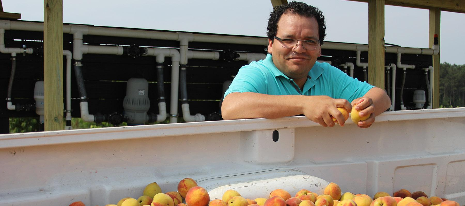 Dr. Dario Chavez poses with a truckload of his research peaches