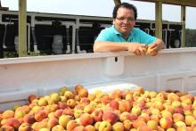 Dario Chavez with a pickup truck full of peaches